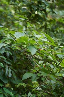 20210826_A02_植物標本採集2.jpg