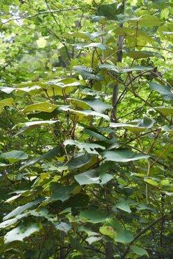 20210826_A02_植物標本採集.jpg